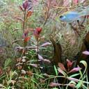 rupantakeoさんのプロフィール画像