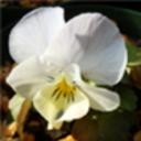 viola310plantsさんのプロフィール画像