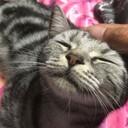 kitty_ayu_love_loveさんのプロフィール画像