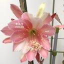 atsu_7777_0325さんのプロフィール画像
