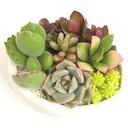 gardenmama36さんのプロフィール画像